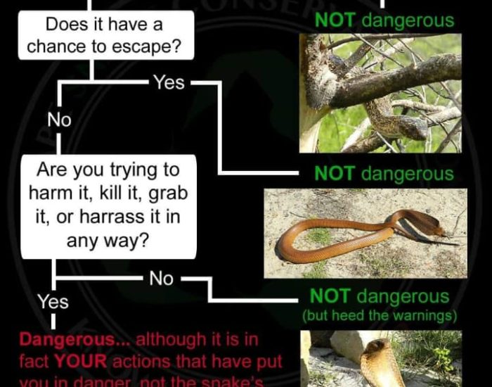 How to tell if a snake is dangerous